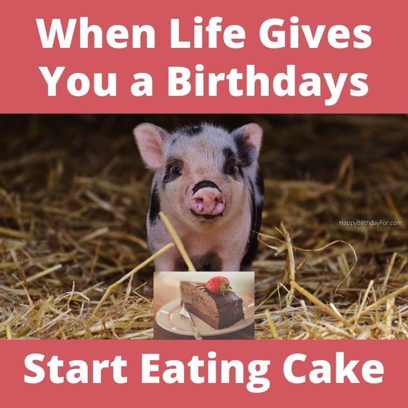 Birthday Cake Meme Funny Birthday Memes for Her