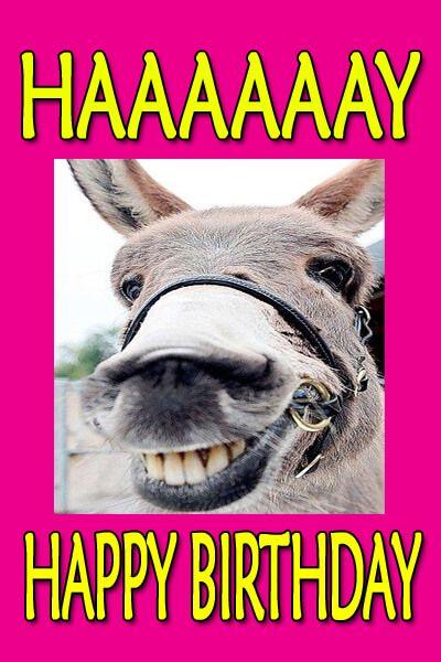 Happy Birthday Meme Donkey