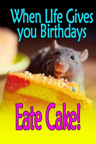 Happy Birthday Meme Rat